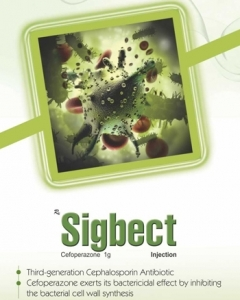 Sigbect-Front.jpg-nggid03199-ngg0dyn-240x300x100-00f0w010c011r110f110r010t010